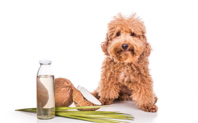 4 ways both you and your dog can benefit from Coconut Oil
