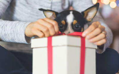 The Best Christmas gift list for Dogs – Under £20