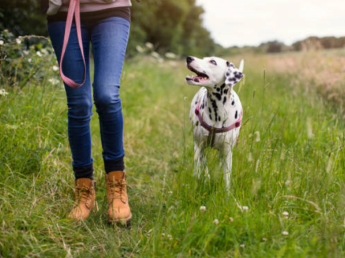 How to make your dog walk more mindful